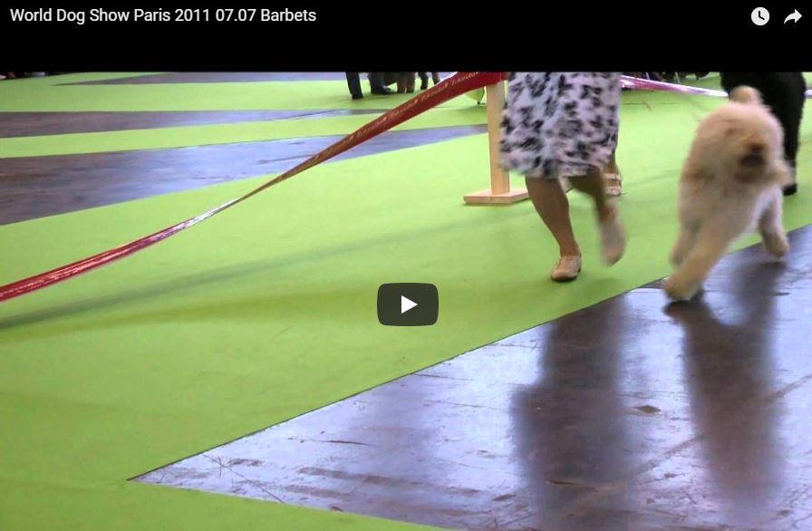 Barbets lors du World Dog Show 2011