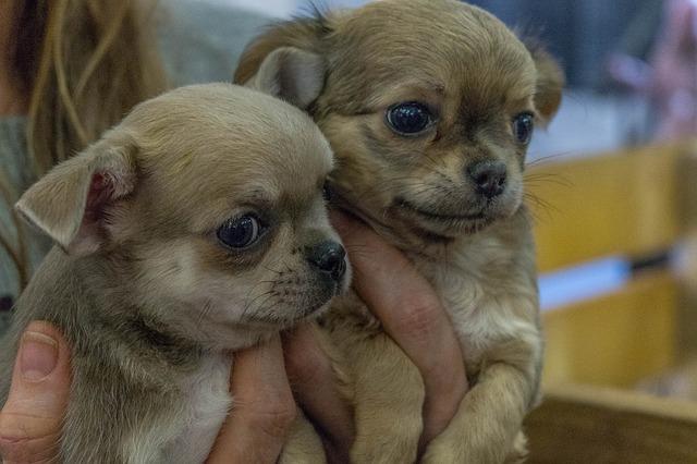 jeunes chiens