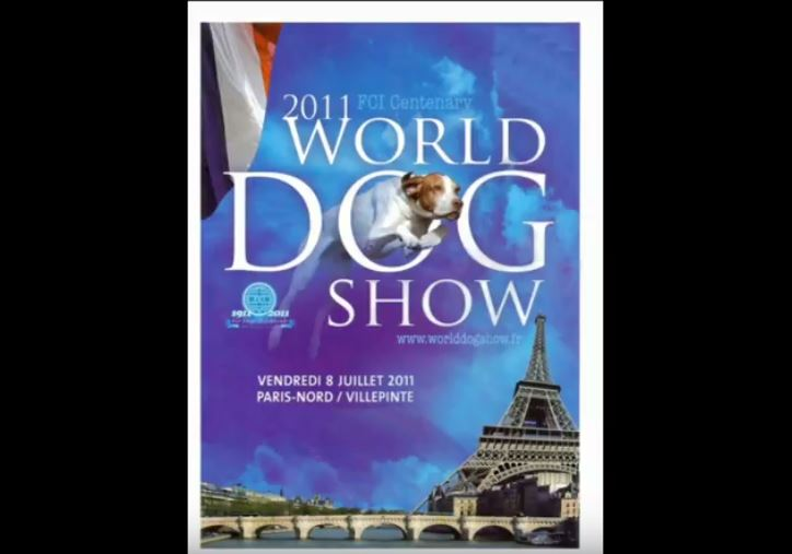 Silky Terrier australiens lors du World Dog Show 2011