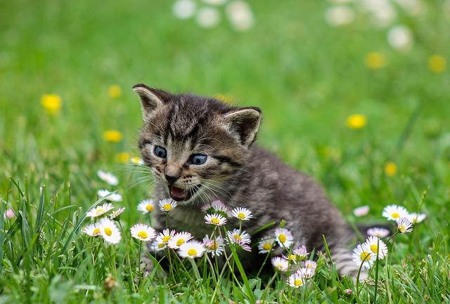 un jeune chaton dans l'herbe