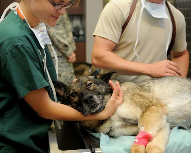 un vétérinaire femme