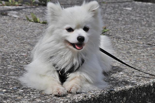 chien avec une laisse